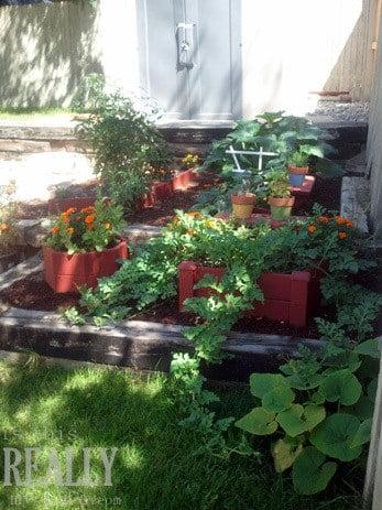 garden box garden