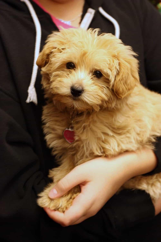 Dogs Needing Adopted At Bulverde Humane Society