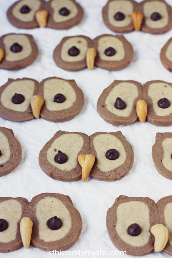 The most adorable and easiest owl cookies ever! Always a hit at holiday parties and with the kids!